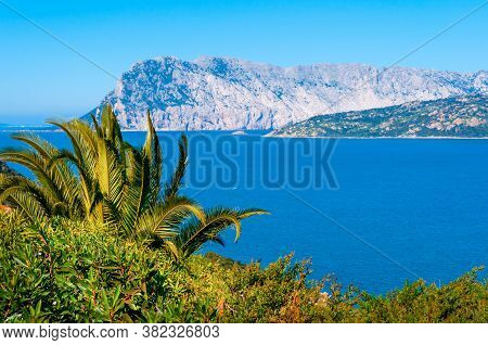 Green Plants By The Sea With Tavolara Island On The Background. Sardinia, Italy