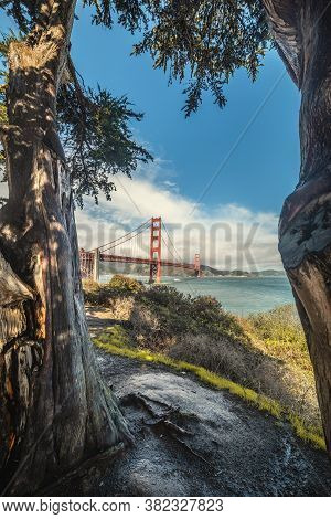World Famous Golden Gate Bridge With Tree's Trunks On The Foreground. San Francisco, Usa