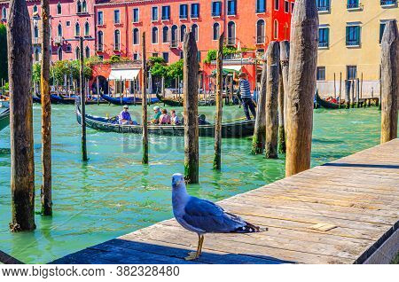 Venice, Italy, September 13, 2019: Seagull On Wooden Pier With Poles Of Grand Canal Waterway In Veni