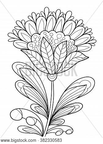 Floral Fantasy Fairy Plant Coloring Outline Illustration For Book Black And White Image With Herbal
