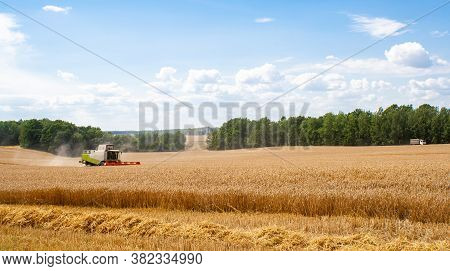 Combine Harvester In Distance Harvests Ripe Wheat,rye In Field, Against Of Trees And Beauty Blue Sky