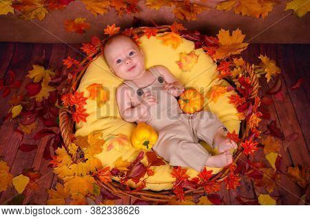 Happy Newborn Lying On Fall Leaves. Portrait Of Beautiful Kid. Cute Baby Boy Lying In Basket With Pu