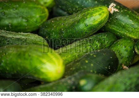 Macro Photo Food Vegetable Cucumber. A Lot Of Juicy Green Cucumbers With Pimples. Texture Background