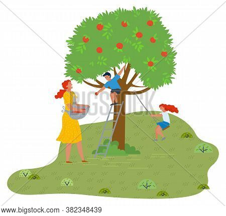Mother, Son And Daughter Have Fun In The Garden. Son Sits On An Apple Tree And Throws Apples, Mother