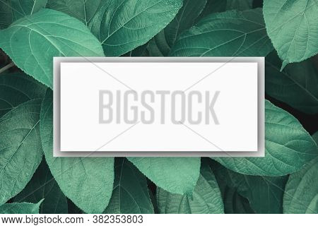 Square Frame With Green Dark Leaves Nature Background And Creative Layout Made Paper Card Note