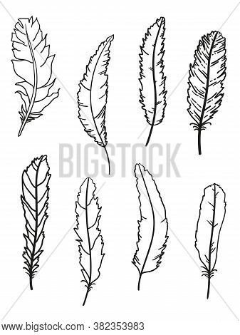 Feather. Hand Drawn Feathers On Isolated White Background