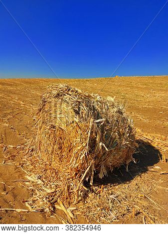 Corn Bale On The Ground. Agriculture Field With Blue Sky. Rural Nature In The Farm Land. Straw On Th