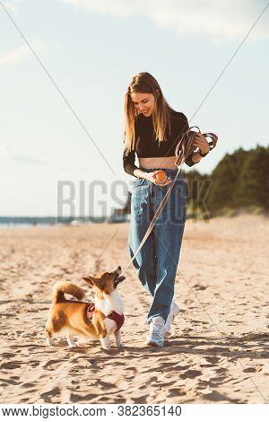 Beautiful Young Woman Playing With Corgi Puppy Walking Along Ocean Beach. Female Looking To Dog