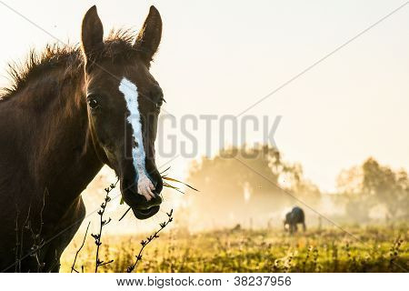 morning meadow with horses