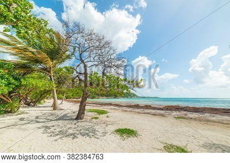 Pointe De La Saline Beach In Guadeloupe, French West Indies. Lesser Antilles, Caribbean Sea