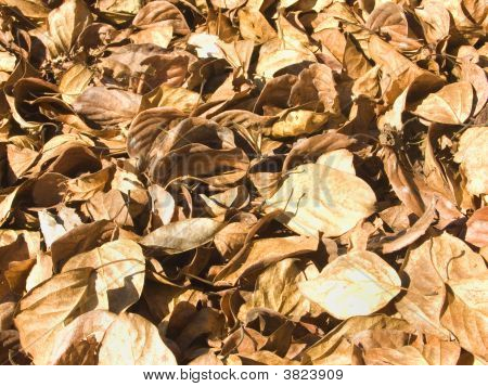 Background from autumn leaves of an aspen of yellow and red colour poster