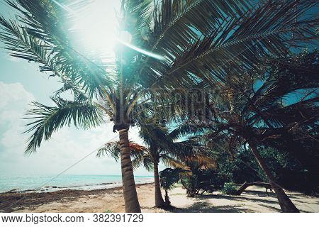 Palm Trees In Pointe De La Saline Beach In Guadeloupe, French West Indies. Lesser Antilles, Caribbea