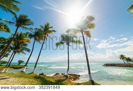 Coconut Palm Trees And Turquoise Sea Under A Shining Sun In Bas Du Fort Beach In Guadeloupe, French