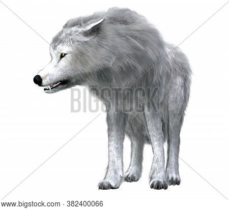Dire Wolf Pack Leader 3d Illustration -  Predatory Dire Wolf Prowled The Forests Of North And South
