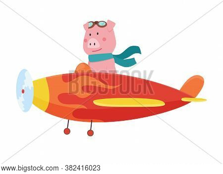 Cute Pig Wearing Aviator Goggles Flying An Airplane With Scarf Fluttering. Funny Pilot Flying On Pla