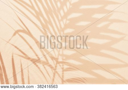 Light And Shadow Green Leaves,palm Leaf On Sand Color Grunge Wall Concrete Background.silhouette Fla