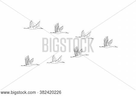 Vector Hand Drawn Doodle Sketch Flying Cranes Birds Flock Isolated On White Background