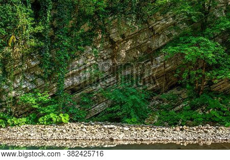 The Nature Of The Sochi National Park Of Boxwood Trees. Wall Of White Karst Cliffs. Emerald Mountain