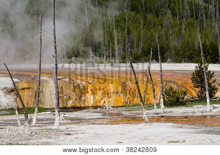 Spouter Geyser at Yellowstone National Park, Wyoming, USA
