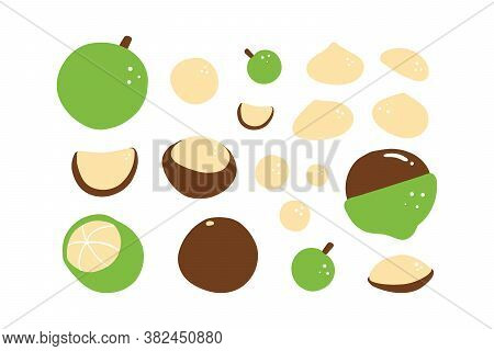 Set, Collection Of Vector Cartoon Style Macadamia Nuts For Healthy Food Design.