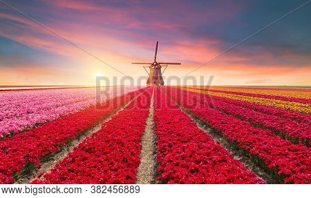 Traditional Netherlands Holland Dutch Scenery With One Typical Windmill And Tulips, Netherlands Coun