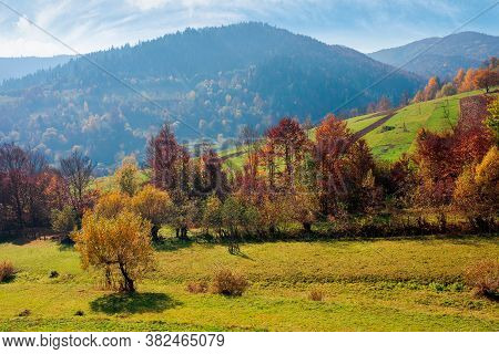 Countryside Autumn Scene In Mountains. Trees In Fall Foliage. Beautiful Sunny Weather With Clouds On