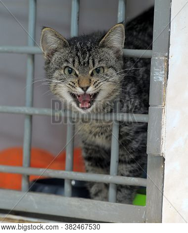 The Cat Stuck His Head Out Of The Cage In The Shelter, Really Wants To Go Home