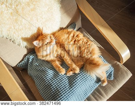 Top View On Cute Ginger Cat Lying On Pillow. Fluffy Pet Is Sleeping On Chair. Cozy Home Lit With Sun
