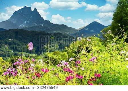 A Garden With Flowers, Pic Du Midi Ossau, French Pyrenees Mountains