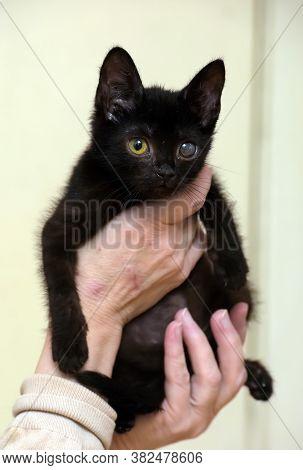 Kitten With An Eyesore, A Leukoma Or An Eyesore