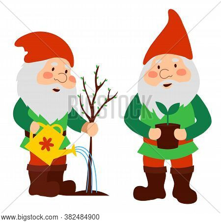 Garden Gnomes In Red Caps. An Old Man Is Watering A Tree Sapling. A Dwarf With A Potted Plant. Isola