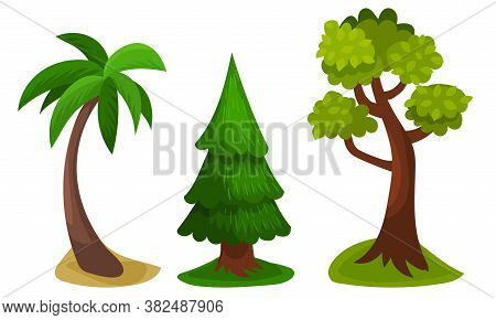 Tree With Exuberant Green Foliage And Trunk Vector Illustration