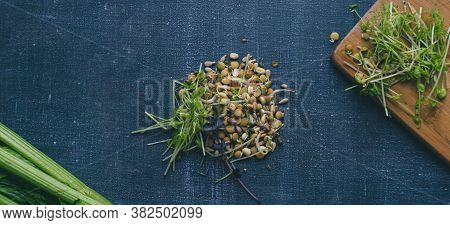 Mixed Sprouts Seeds Of Green, Lentils Flax Seed. New Life Concept Seed Germination. Complete Balance