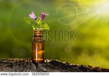 Natural Organic Herbal Essence In A Glass Bottle. Bottle With Essential Oil.