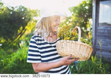 Happy Smiling Elderly Senior Woman In Straw Hat Having Fun Posing In Summer Garden With Flowers In B