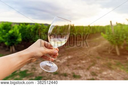 Glass Of Wine On The Background Of Vineyard. A Young Woman Holding A Glass Of White Wine. Wine Produ