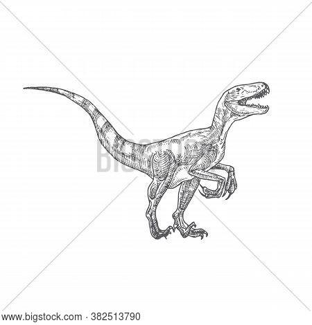 Prehistoric Dinosaur Doodle Vector Illustration. Hand Drawn Velociraptor Reptile Engraving Style Dra