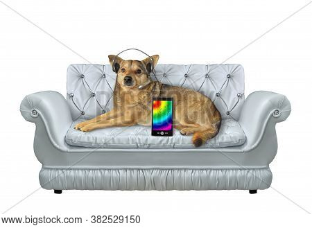 The Beige Dog In Headphones Is Lying On A Stylish Gray Leather Divan And Listening To Music. White B