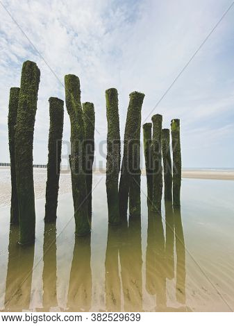 water breakers covered by green seaweed on the beach of the coast at the french Opal cost in France. the beach poles reflecting in water.