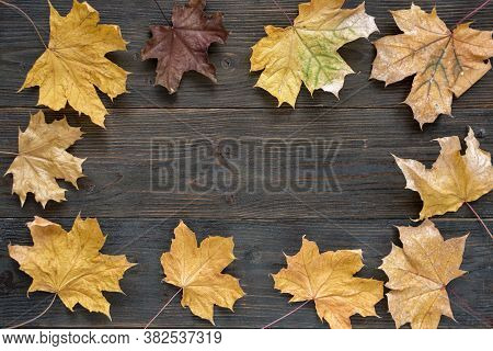 Autumn Leaves On Wooden Background. Procurement For Designers. Template. Backdrop. Mock Up