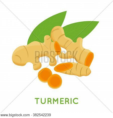 Turmeric Root, Isolated On White Background. Vector Cartoon Illustration.
