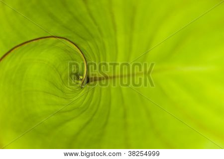 Close up Green Tropical Plant