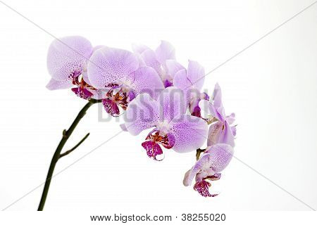 collection of beautiful pink orchids on white