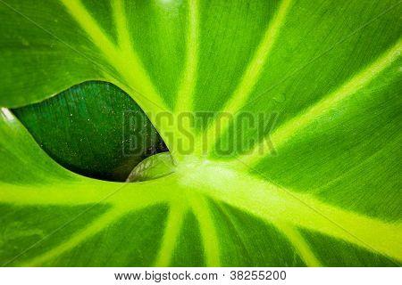 a leaf behind a leaf
