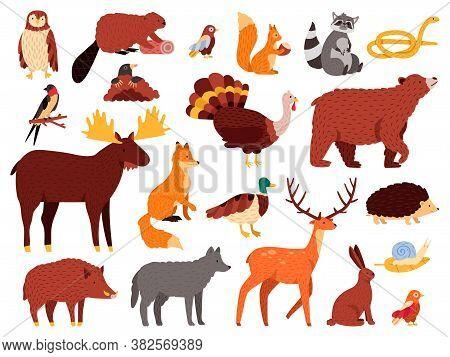 Cute Animals. Cartoon Forest Animals, Bear Raccoon Fox And Cute Owl, Hand Drawn Mammals And Birds, F
