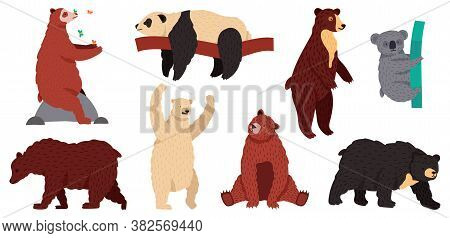 Bears Species. Wild Mammal Characters, Furry Forest Predators, Grizzly Panda Koala And Arctic White