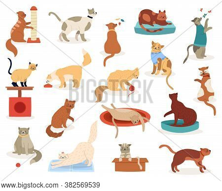 Cartoon Cats. Cute Kitten Characters, Funny Fluffy Playful Cats, Pedigree Breeds Pets, Adorable Kitt