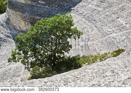 Traveling. Explore World. Nature View. Magnificent Chalk Mountains. Green Blooming Tree In Centre. D