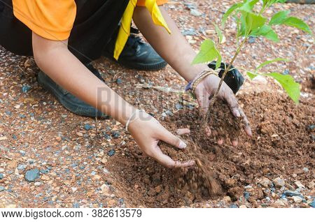 Student Hands Of School Girl In Motion Of Plantation Tree On The Ground As Concept Of Green Environm