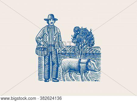 Hog And Farmer For Locating Truffles Mushrooms. Domestic Pig . Engraved Hand Drawn Vintage Sketch. W